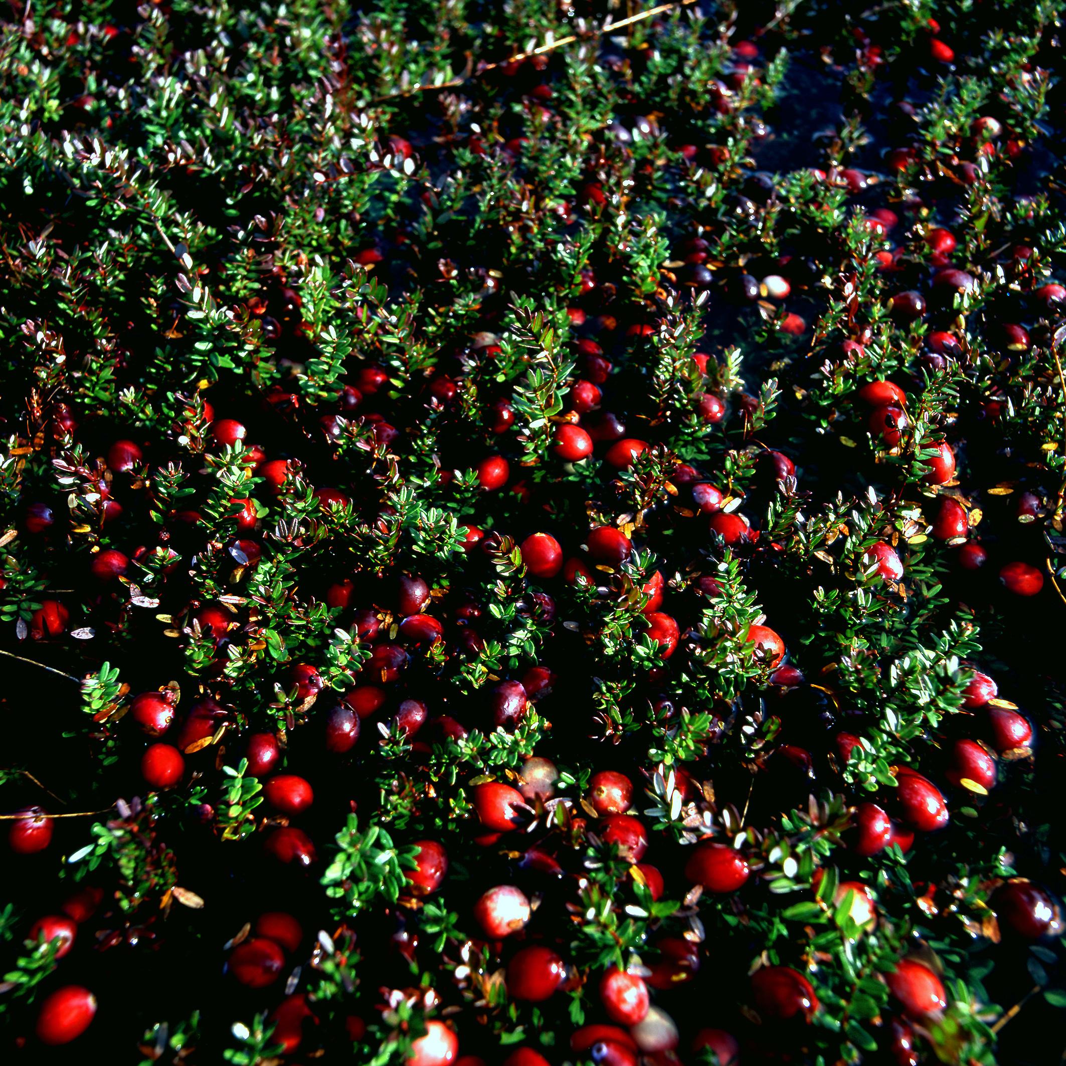 www cranberries usa fr